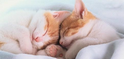 Компания «Сладкий Сон» поздравляет с праздниками глобальными скидками